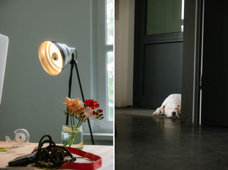anika-vaeth-hund-lampe