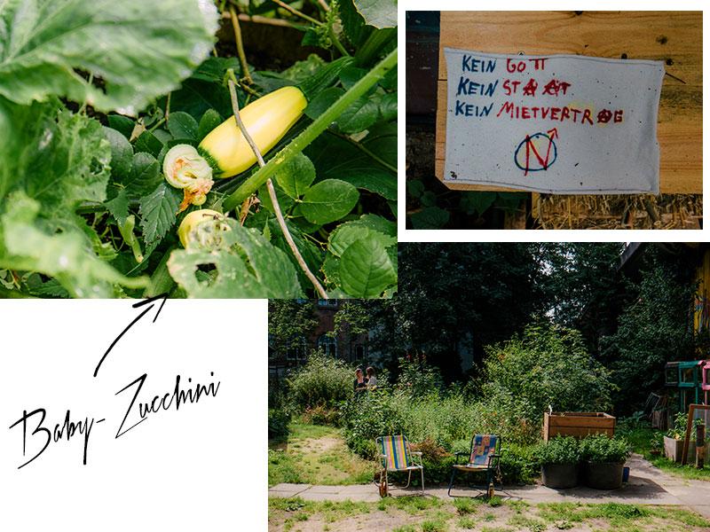 09-muenzgarten-zucchini