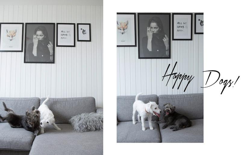 sara-bjarnadottir-mili-store-dogs