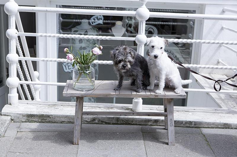 sara-bjarnadottir-mili-store-hunde