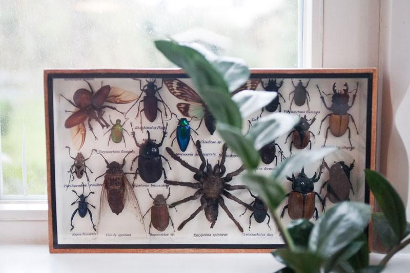 8-mariefee-steinvorth-insekten