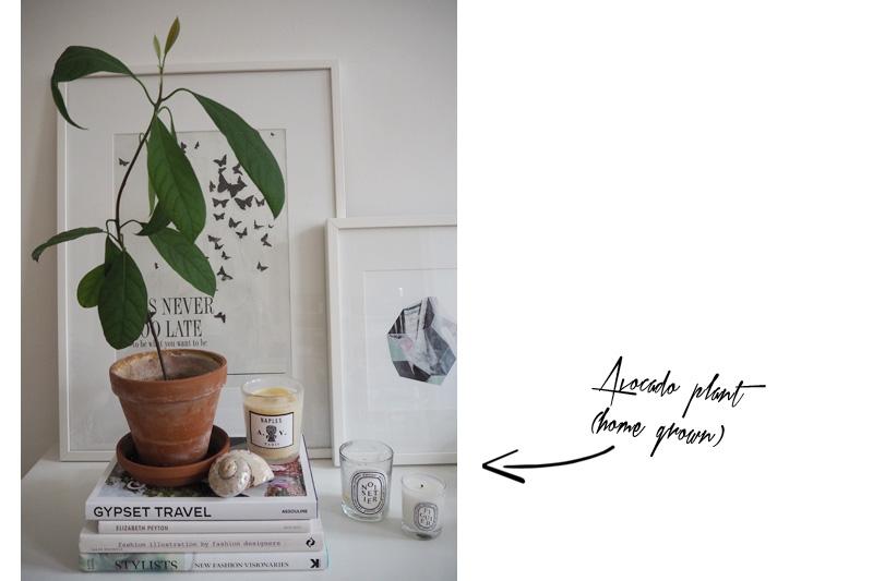 Themenwoche-Zimmerpflanzen-Anna-1