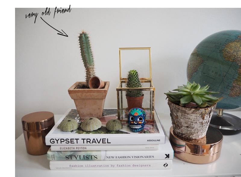 Themenwoche-Zimmerpflanzen-Anna-3