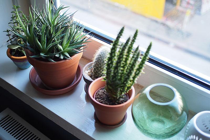 Themenwoche 34 Zimmerpflanzen Lisa Femtastics