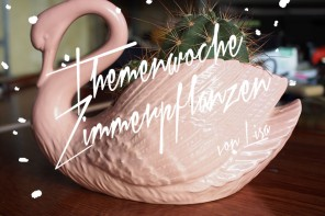 zimmerpflanzen-lisa-teaser