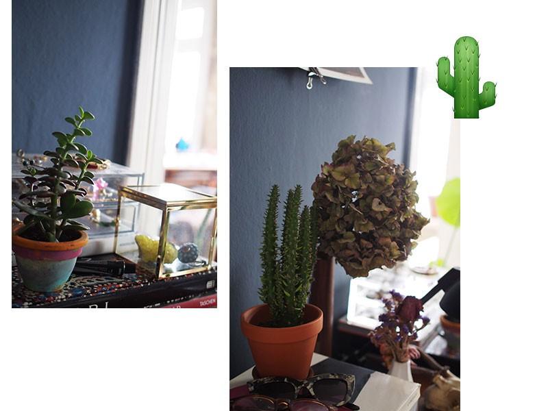 kaktus-sukkulente