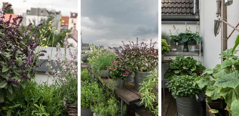 Femtastics-Alexandra-Springer-Tres-Click-Balkon-Pflanzen