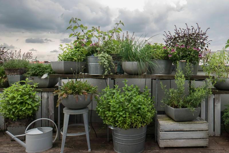 Femtastics-Alexandra-Springer-Tres-Click-Balkon-Pflanzen-Gruppe