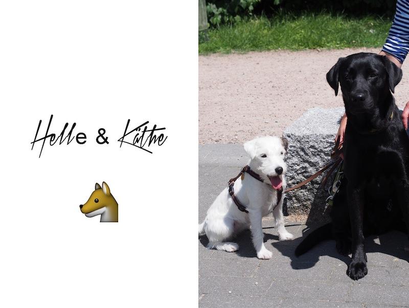Hundebande-HH Kopie