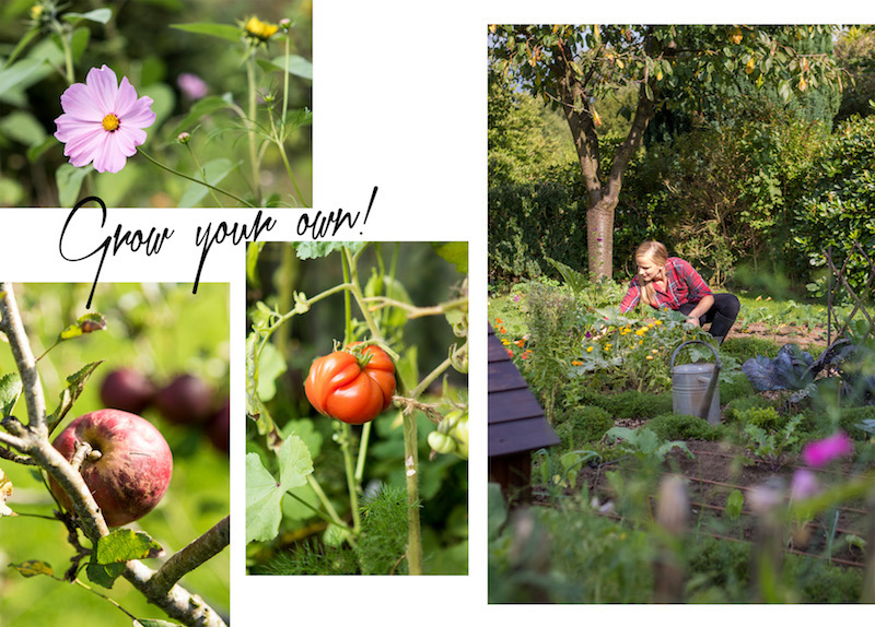 Schrebergarten-growyourown