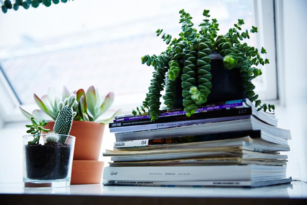 Femtastics-Jules-Wenzel-Wohnung-Pflanzen