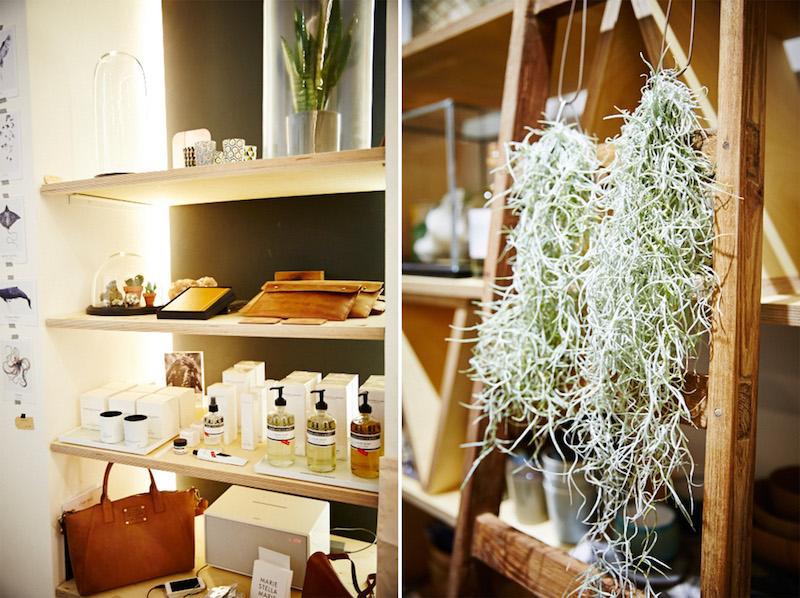 winkel-van-sinkel-air-plants