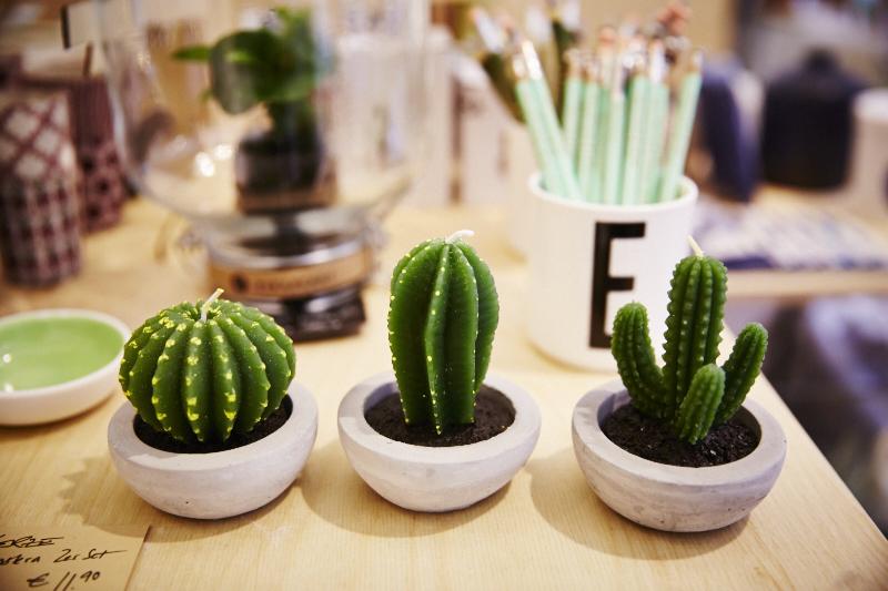 winkel-van-sinkel-pflanzen