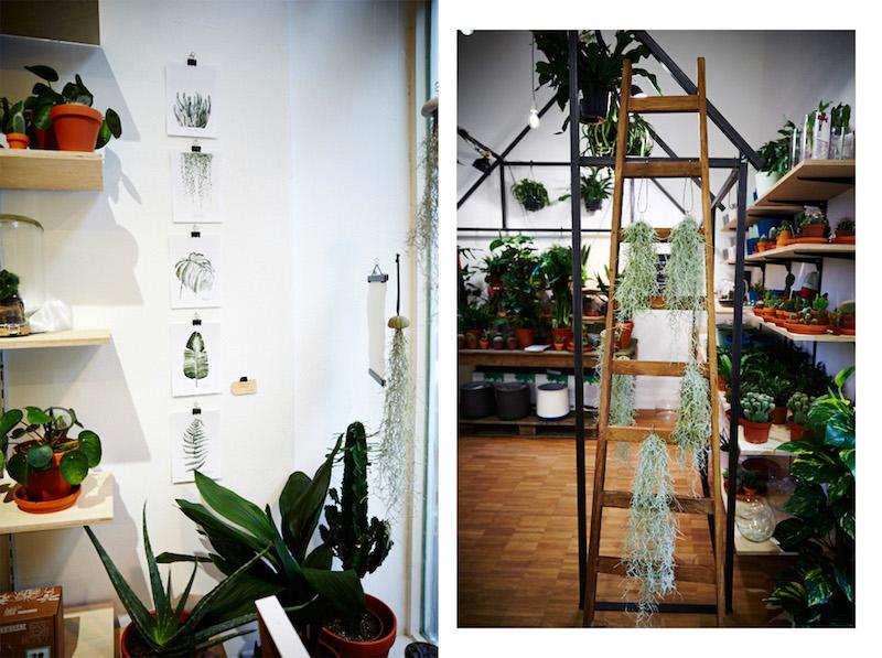 winkel-van-sinkel-store-pflanzen-neu