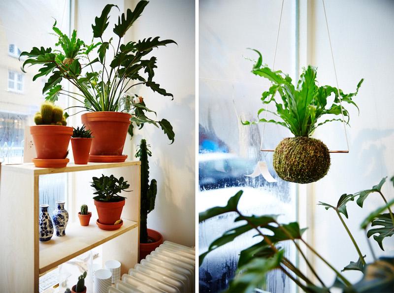 winkel-van-sinkel-store-pflanzen