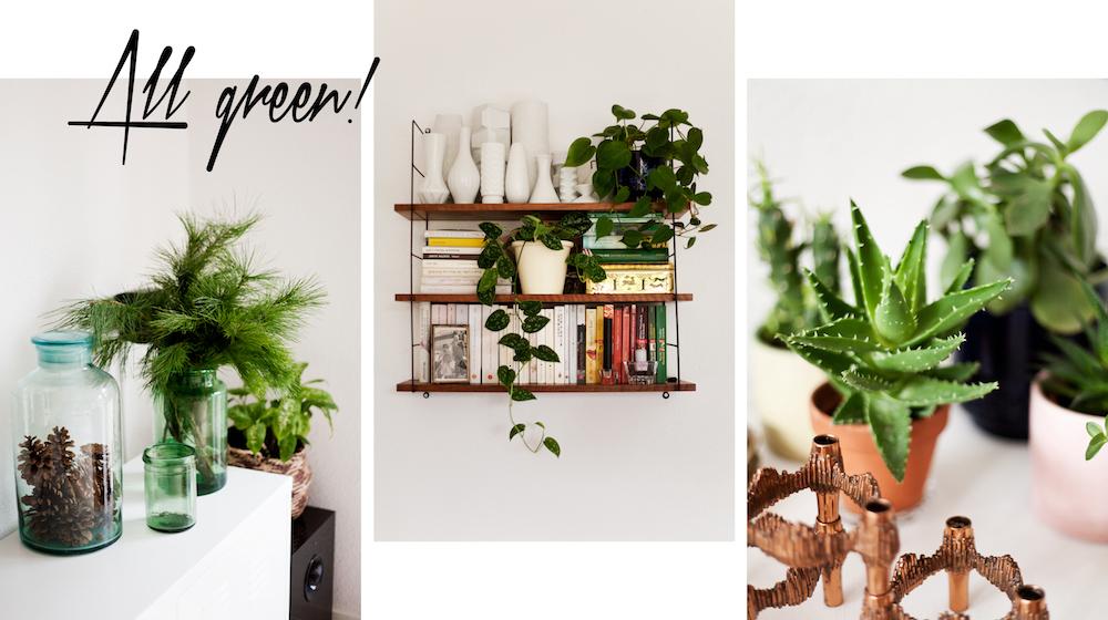 ambacht-homestory-pflanzen