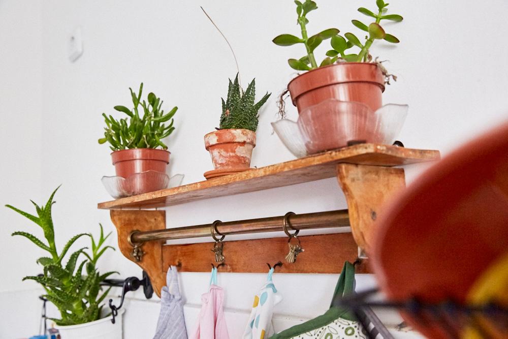 femtastics-Linda-Adhiambo-Kueche-Pflanzen