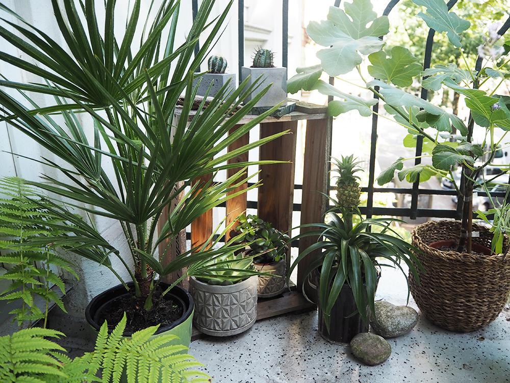 femtastics-Trend-Balkonpflanzen