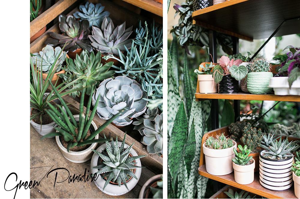 Ein leben mit pflanzen jin ahn von conservatory archives for Pflanzen laden berlin