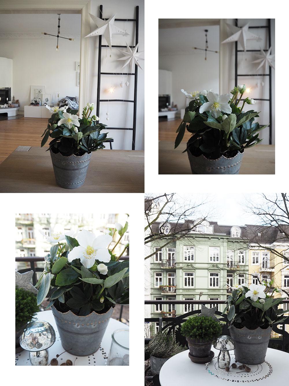 femtastics-Anna-Christrose-Blume2000.de-Weihnachten