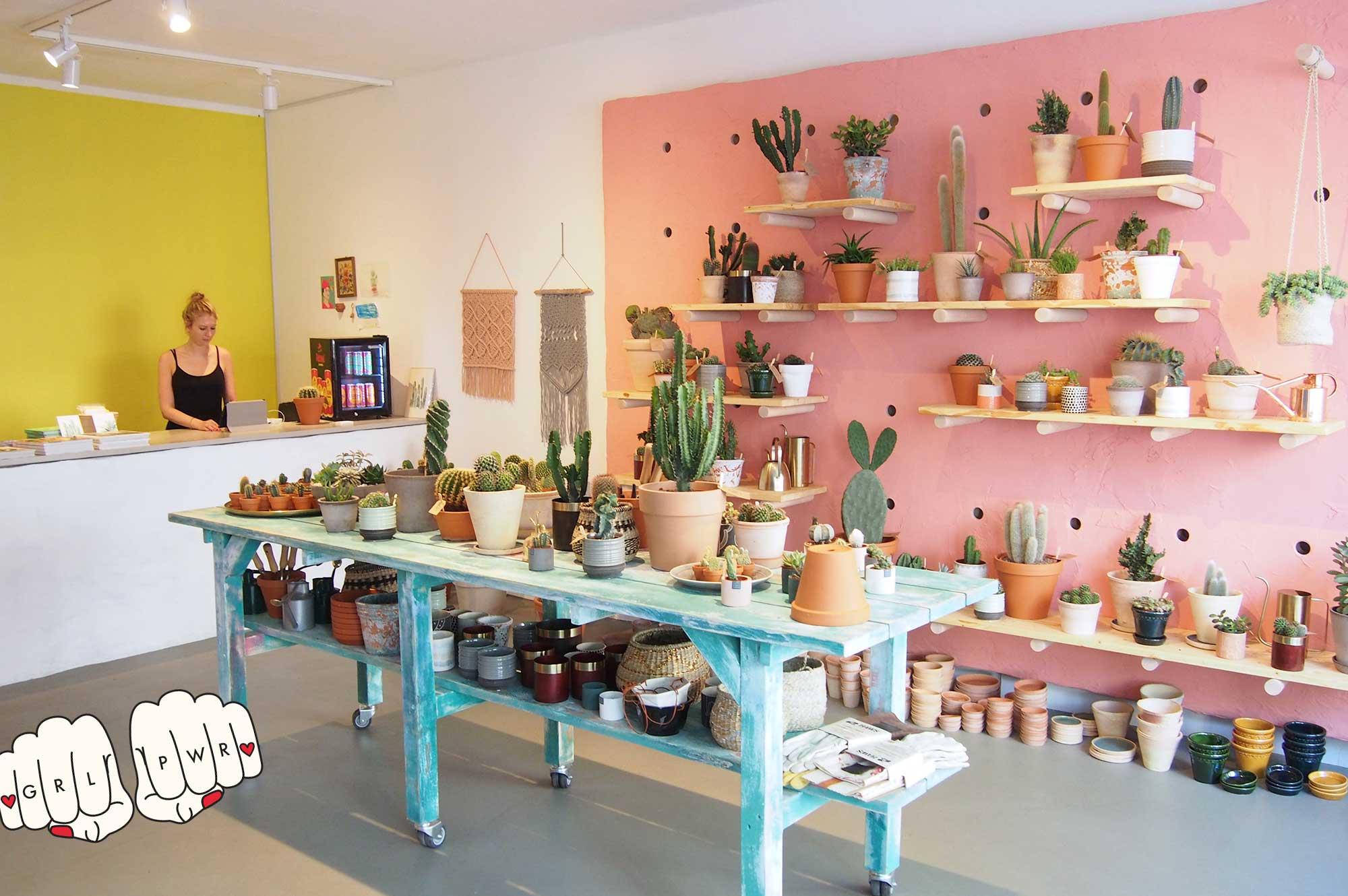 Kaktus-kaufen-Hamburg