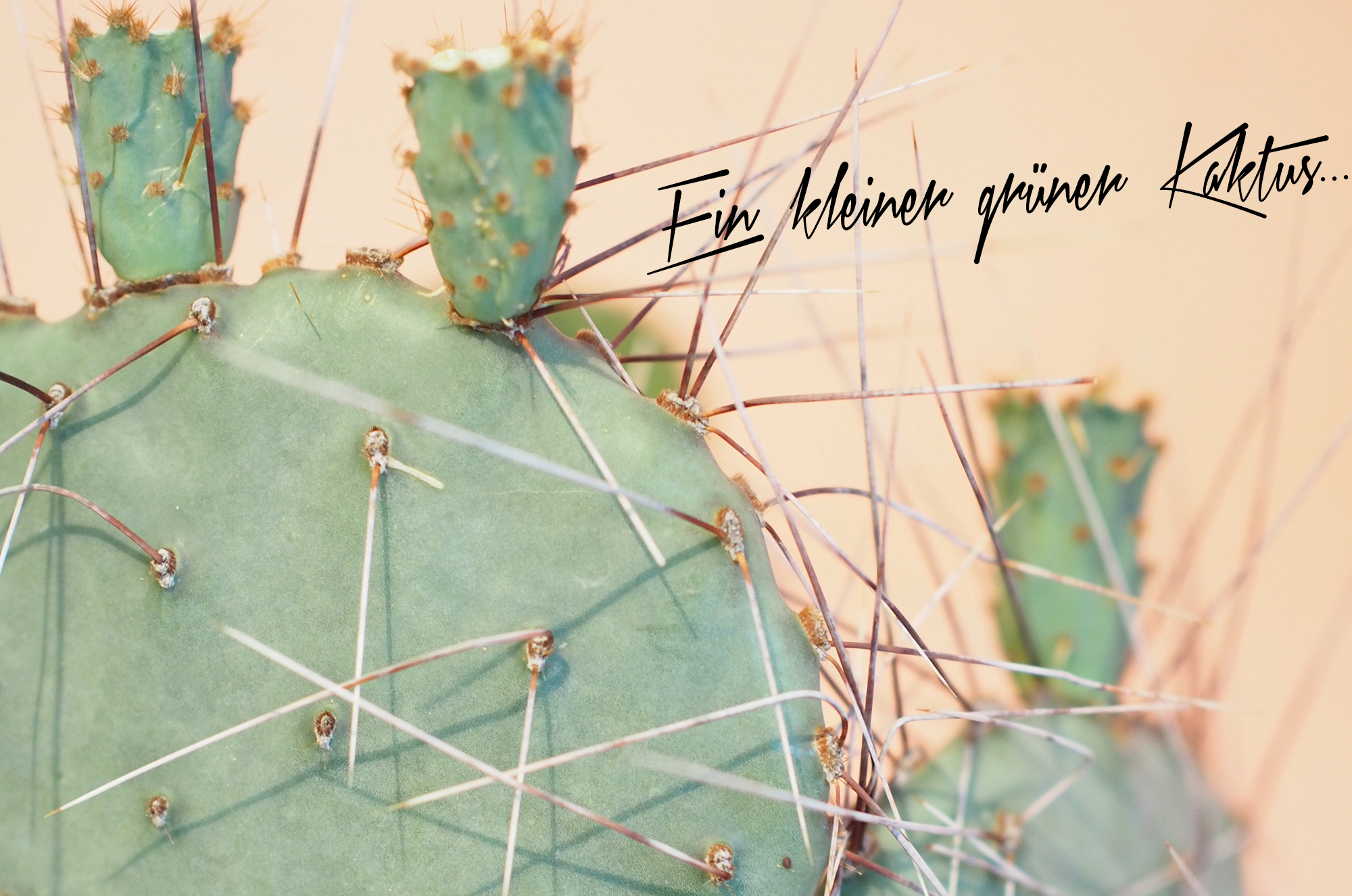 Kleiner-Kaktus-HH-neu