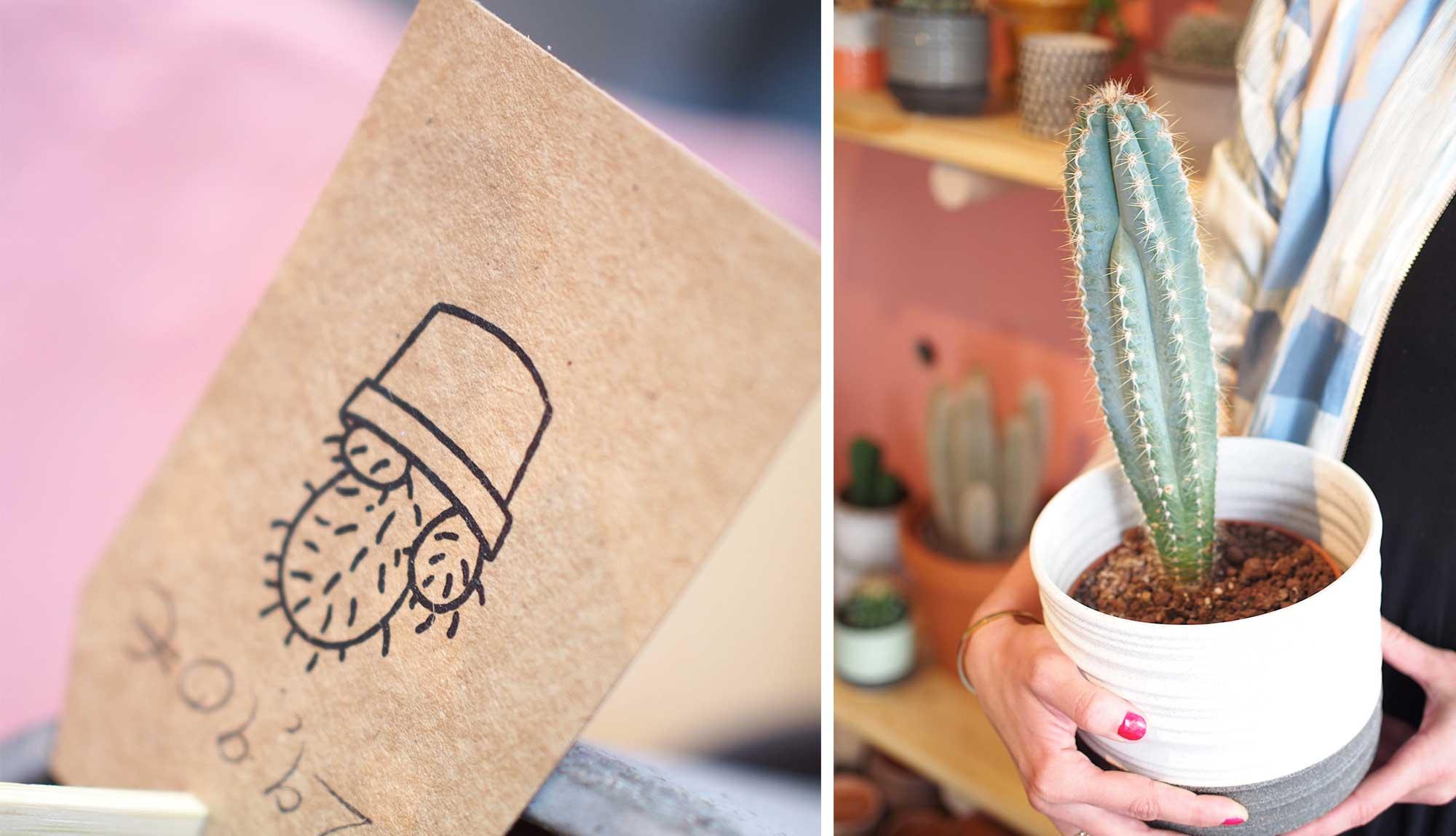 Kleiner-Kaktus-Portrait
