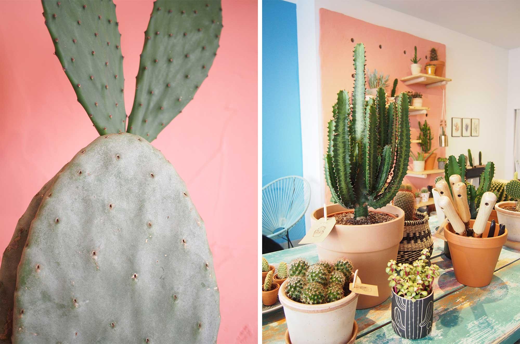 Kleiner-Kaktus-Store-Hamburg