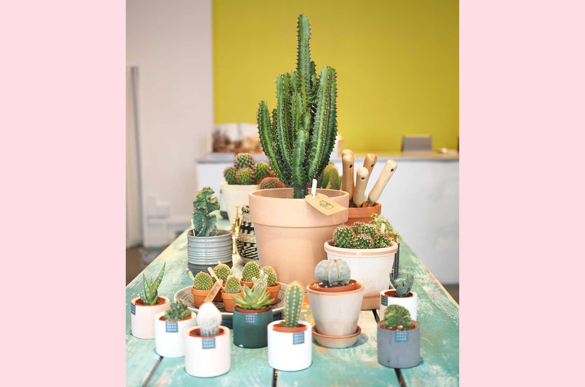 Laden-Kleiner-Kaktus