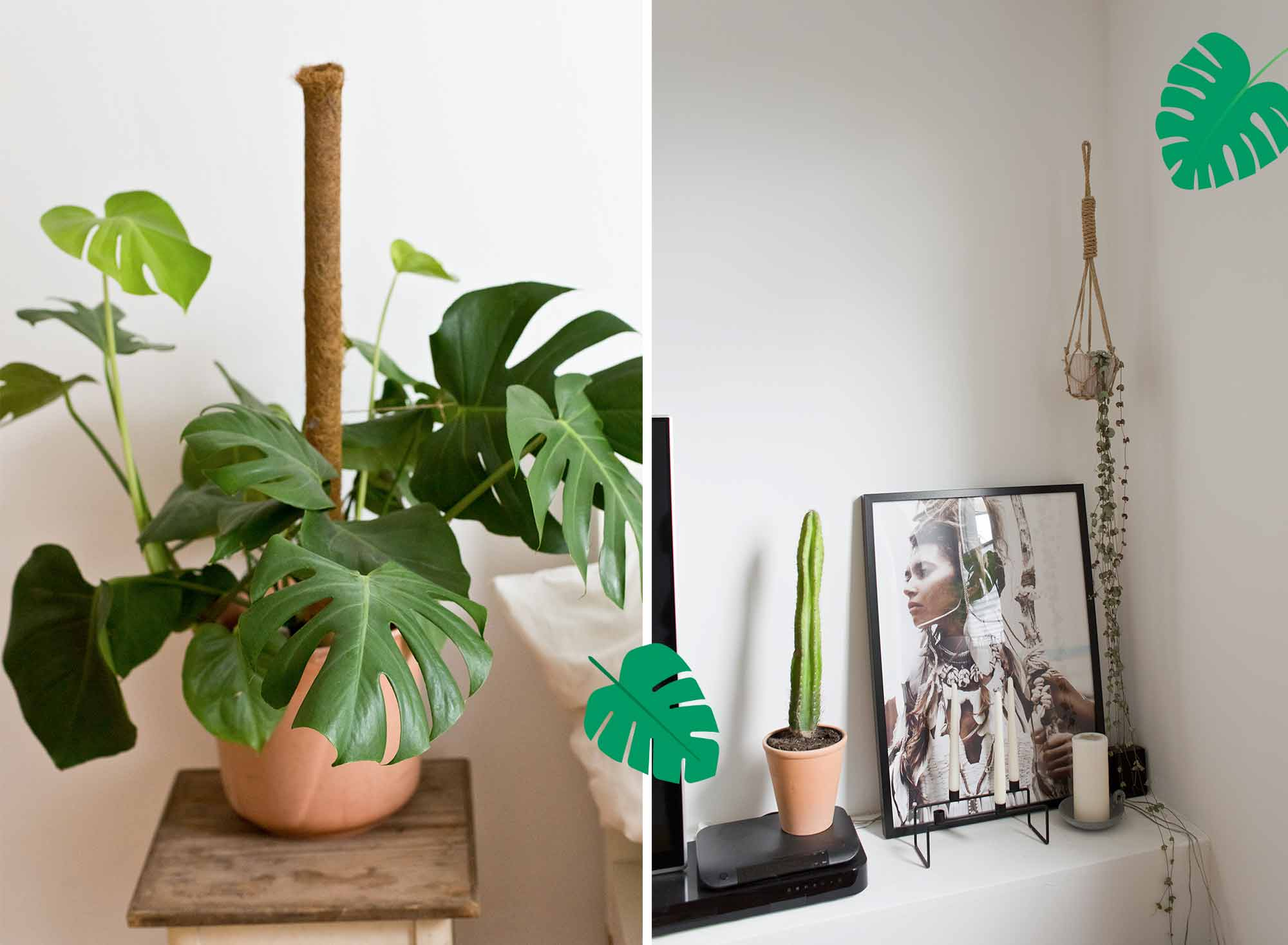 23-pflanzen-Femtastics_Altbremerhausmomente_4711_10