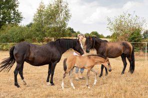 Die Pferdeflüsterin Schleswig-Holsteins