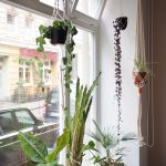 Unser Urban Jungle im Schaufenster! Unser Favorit: Die Blumenampel von Studiohammel.