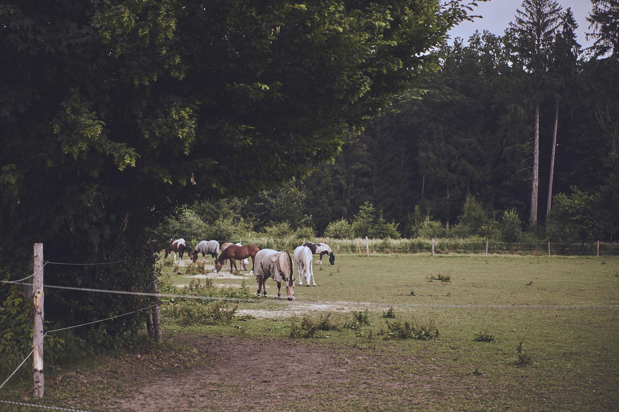 farmmade_014