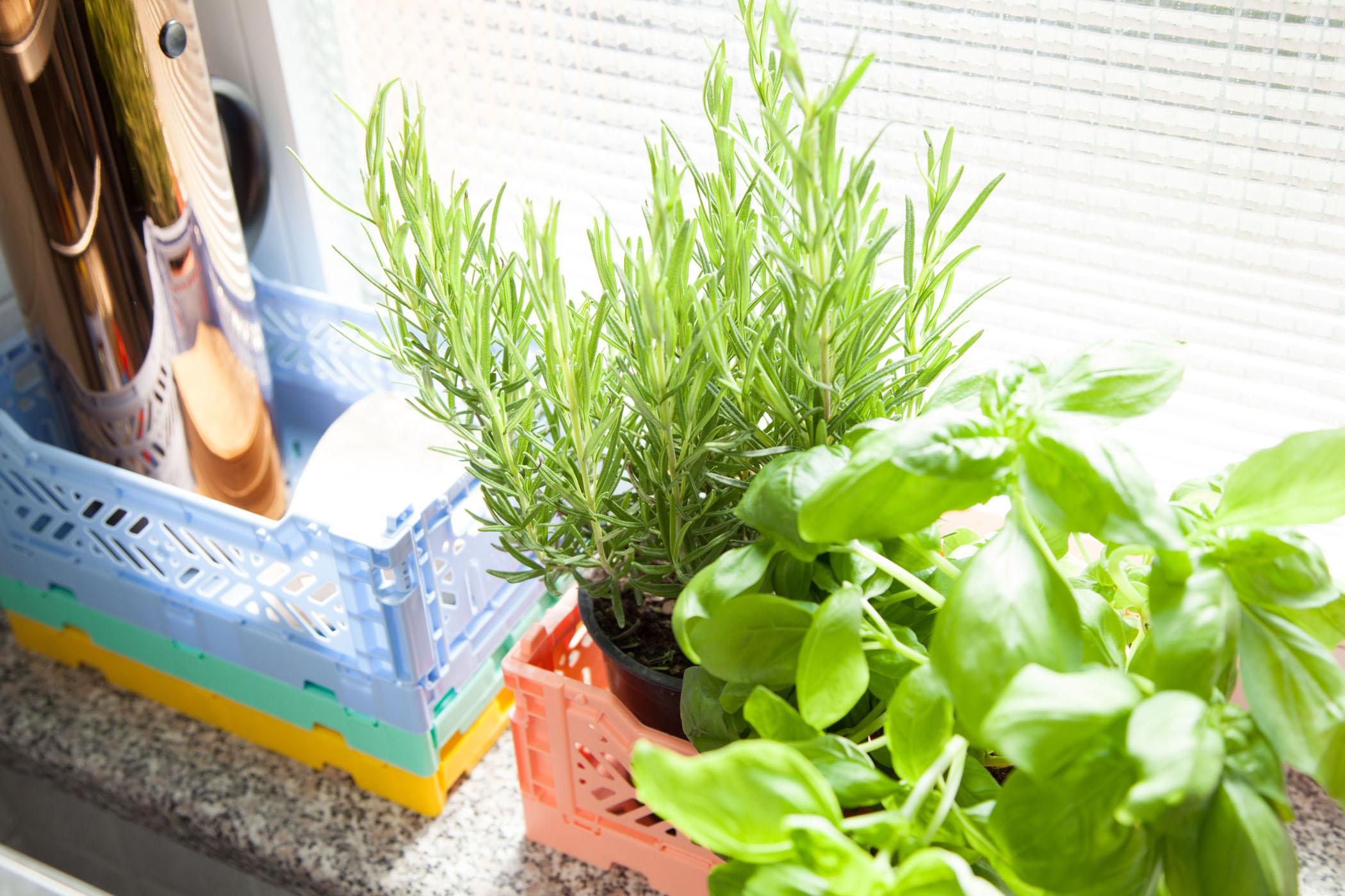Bunte-Kisten-Plastik