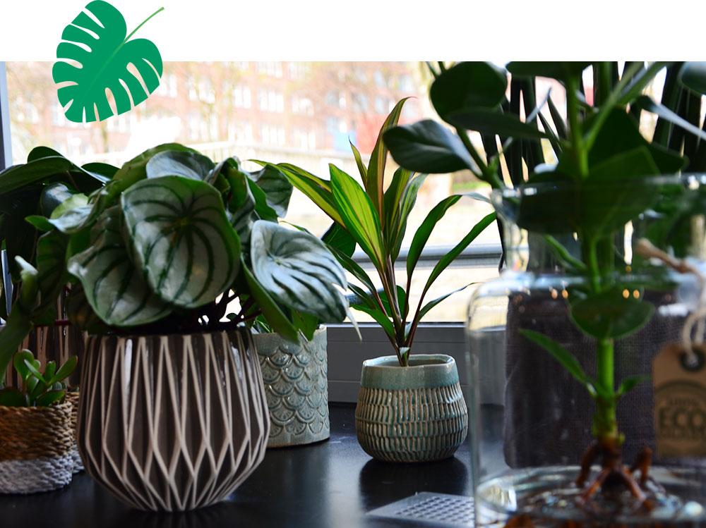 homtastics-Pflanzen-fuer-Maenner