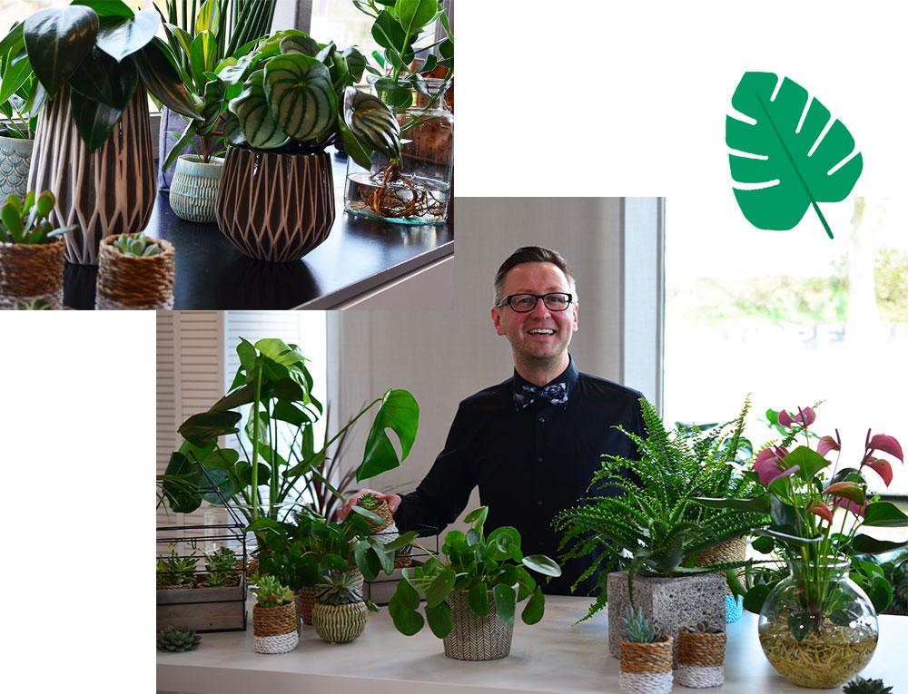 homtastics-Zimmerpflanzen-Ben-Ganser