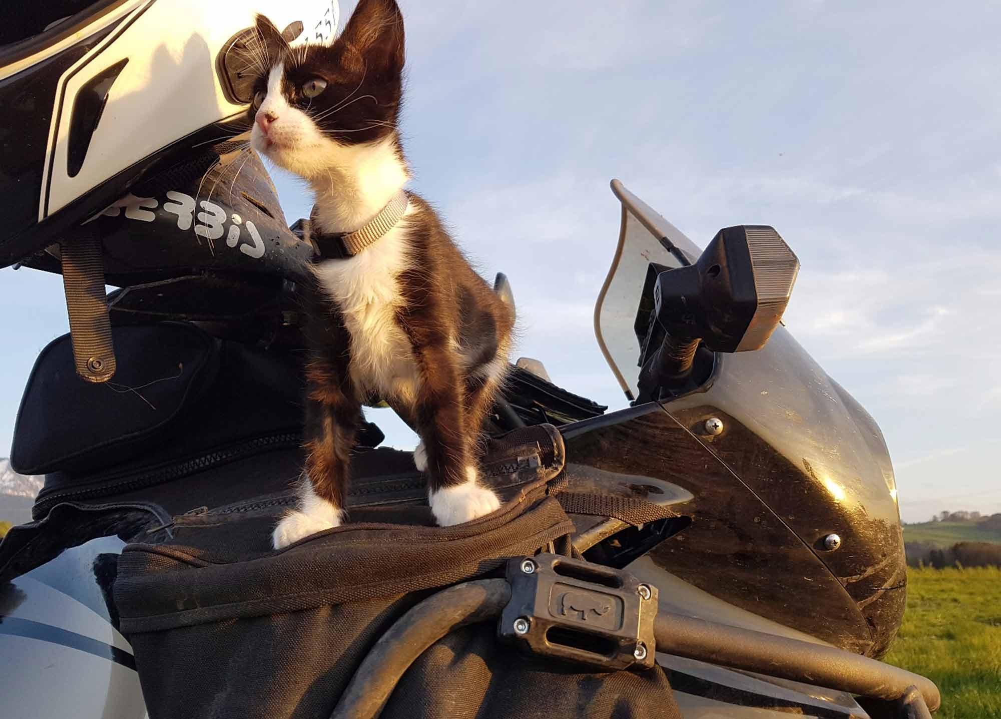 mit-Katze-verreisen